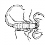 http://commons.wikimedia.org/wiki/File:PSF-scorpion.png