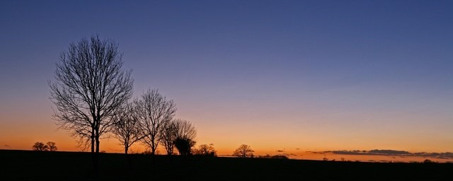 https://commons.wikimedia.org/wiki/File:Trees_near_Kings_Ripton_at_dusk_-_geograph.org.uk_-_309516.jpg